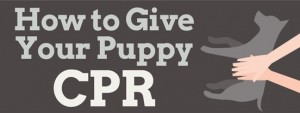 How To Give Your Puppy CPR Infographic