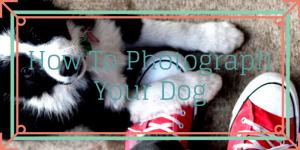 How To Photograph Your Dog