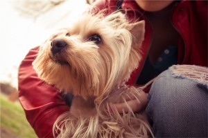 Understanding Separation Anxiety In Your Puppy