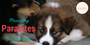 Preventing Parasites In Your Puppy