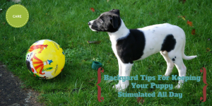 Backyard Tips For Keeping Your Puppy Stimulated All Day