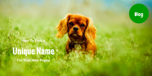 How To Find A Unique Name For Your New Puppy