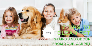 7 Tips To Clean Pet Stains And Odour From Your Carpet