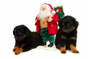 Pet Safety During the Christmas Holiday Season
