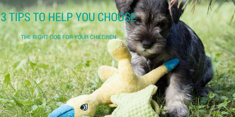 3 TIPS TO HELP YOU CHOOSE THE right dog for your children