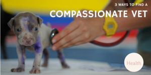 3 Ways To Find A Compassionate Vet