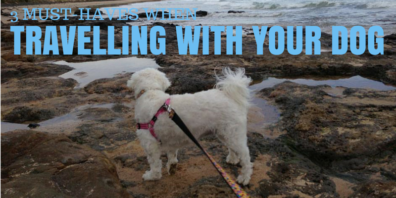 3_must_haves_when_travelling_with_your_dog