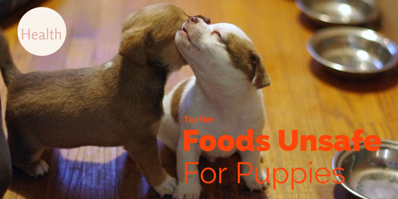 Top Five Foods to avoid puppies