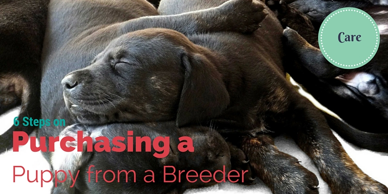 6 steps on Purchasing a Puppy from a Breeder