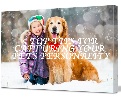 5 TOP TIPS FOR CAPTURING YOUR PETS PERSONALITY
