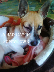 A Bad Day in Puppy Town – Pet Insurance