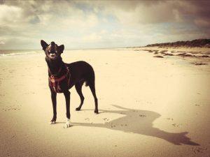 photography_dog