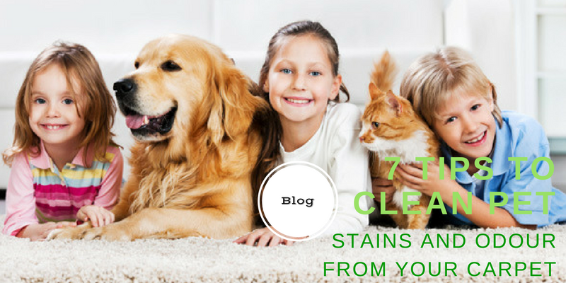 7 Tips to clean pet STAINS AND ODOUR