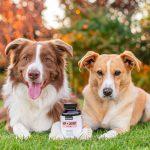 Petz Park Dog Supplement Hip and Joint