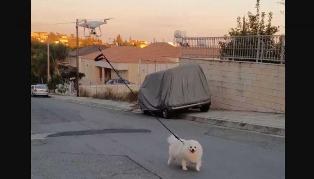 Dog-Going-for-Drone-Walk-Vakis-Demetriou-Facebook-Screenshot