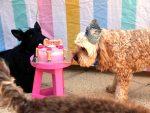 Dog Party Celebrations