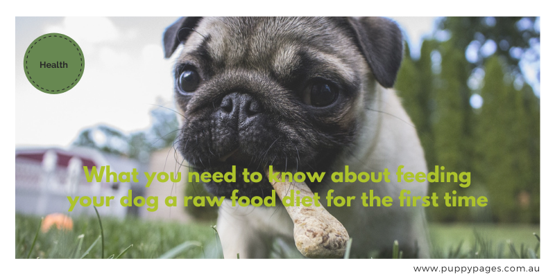 What you need to know about feeding your dog a raw food diet for the first time